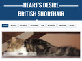 Heart's Desire, British Shorthair